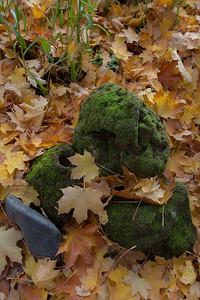 Oregon Garden in autumn and Beardsley Gammel