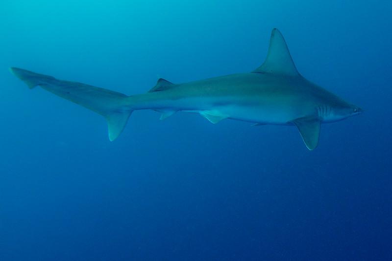 Sandbar Sharks 4