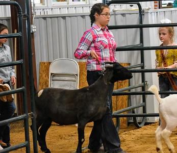 Hunt County Fair 2019: Market Goats