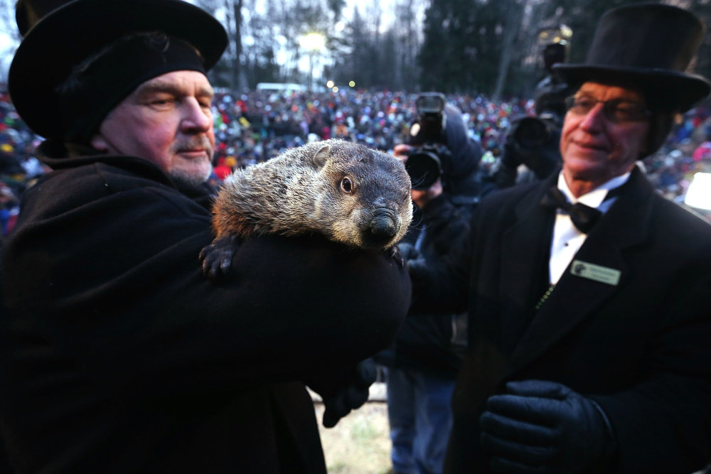 Description of . Groundhog co-handler John Griffiths (L) holds Punxsutawney Phil as co-handler Ron Ploucha (R) looks on after Phil didn't see his shadow and predicting an early spring during the 127th Groundhog Day Celebration  at Gobbler's Knob on February 2, 2013 in Punxsutawney, Pennsylvania. The Punxsutawney 'Inner Circle' claimed that about 35,000 people gathered at the event to watch Phil's annual forecast. (Photo by Alex Wong/Getty Images)