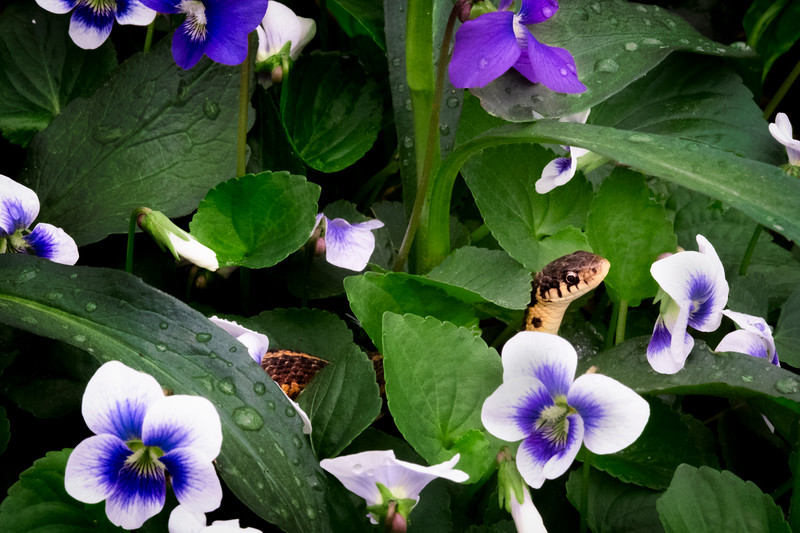 Flowers040919-160.jpg
