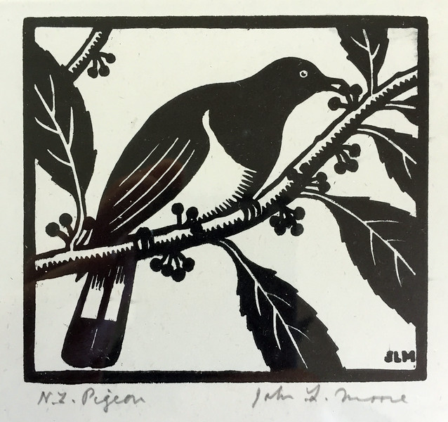 NZ Pigeon.jpg