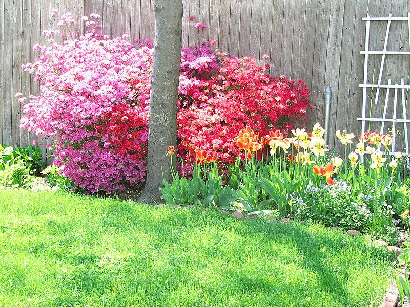 garden-2007-05-0559_std.jpg