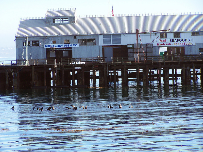 Sea Lions at Fisherman's Wharf, Monterey