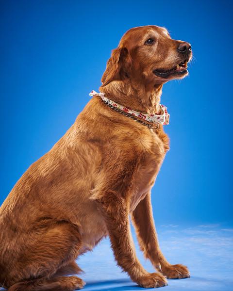 2016_12_24_Christmas Dogs4170 1.jpg