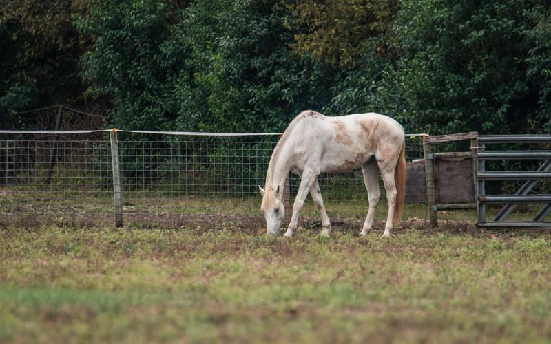 White Horse_DWL3251.jpg