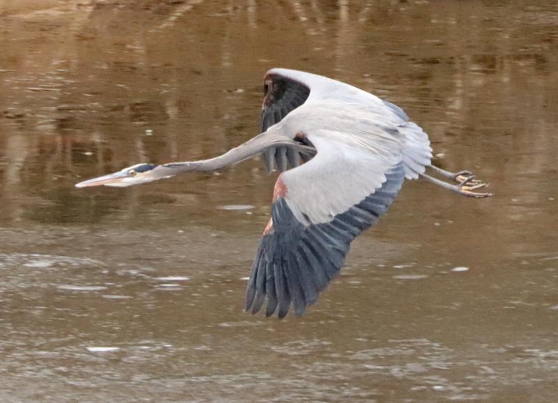 Heron 95