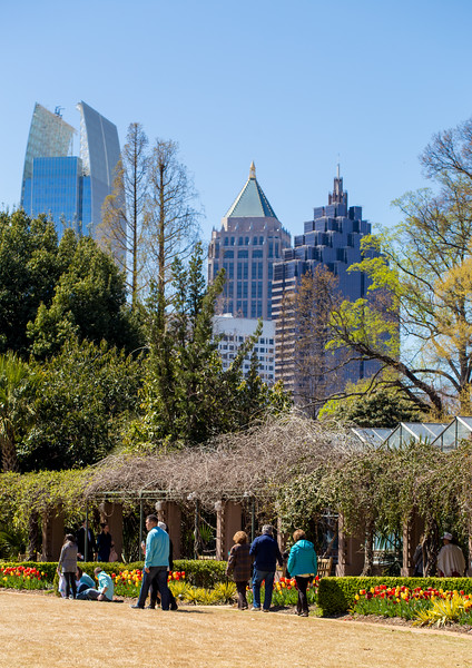 The Atlanta Botanical Garden is in bloom with tulip at the Midtown attraction.  The garden recently renovated children's garden now open with a new treehouse, climbing nets and a snake path for kids of all ages.  The edible garden grows kale and chard along with a wall of herbs.  (Jenni Girtman / Atlanta Event Photography)