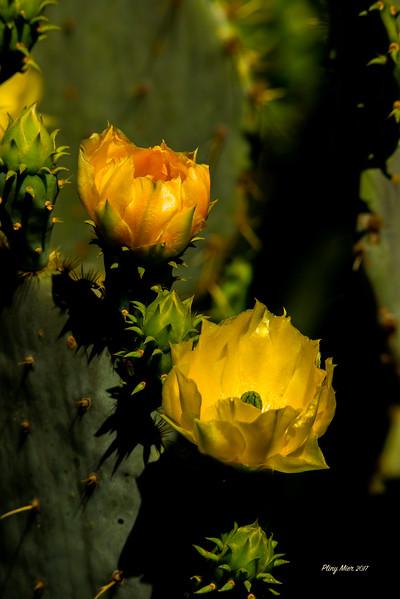 FlowersLL.jpg