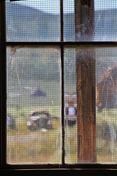 Icon Through the Window