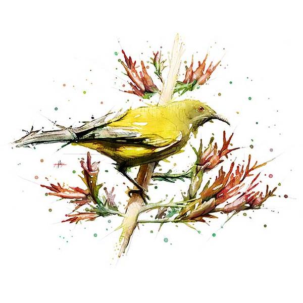 nz-bird-4.jpg