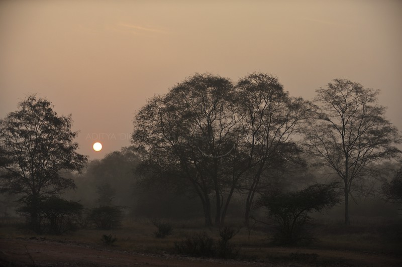 Jungles of Ranthambhore national park at sunrise