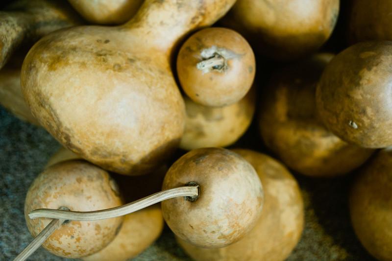 spelman_gourds-8.JPG