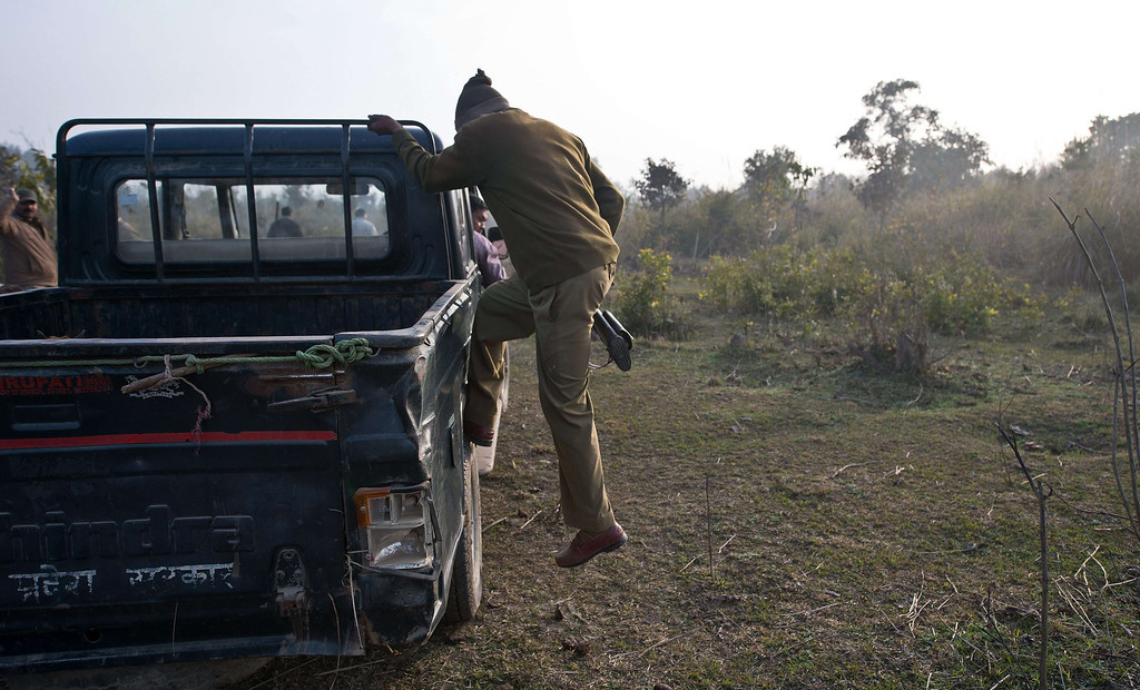 . An Indian forest guard gets down from a vehicle during a patrol in the forest near the village of Barahpur in Bijnor District some 120kms north-east of New Delhi on February 2, 2014.  Since December 29, 2013, the same tiger is believed to have killed eight people living near the national park which covers 521 square kilometers in the northern states of Uttar Pradesh and Uttarakhand.  PRAKASH SINGH/AFP/Getty Images
