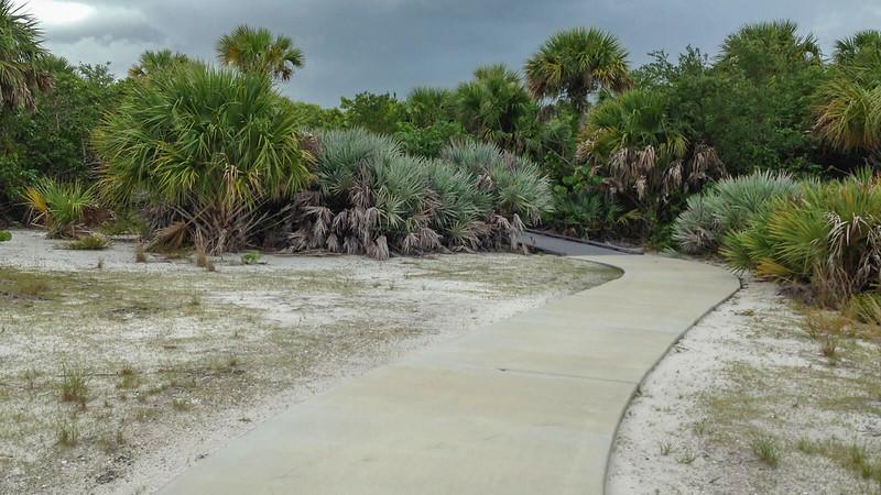 Sidewalk in scrub habitat