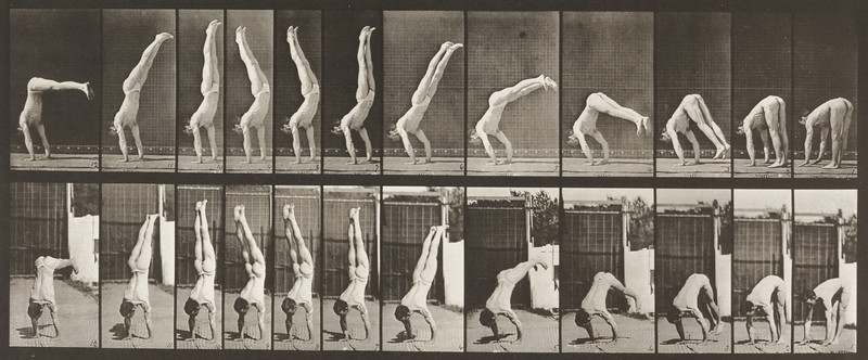 Male acrobat wearing pelvis cloth performing vertical press up (Animal Locomotion, 1887, plate 371)