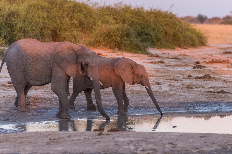 Botswana_June_2017 (4234 of 6179).jpg