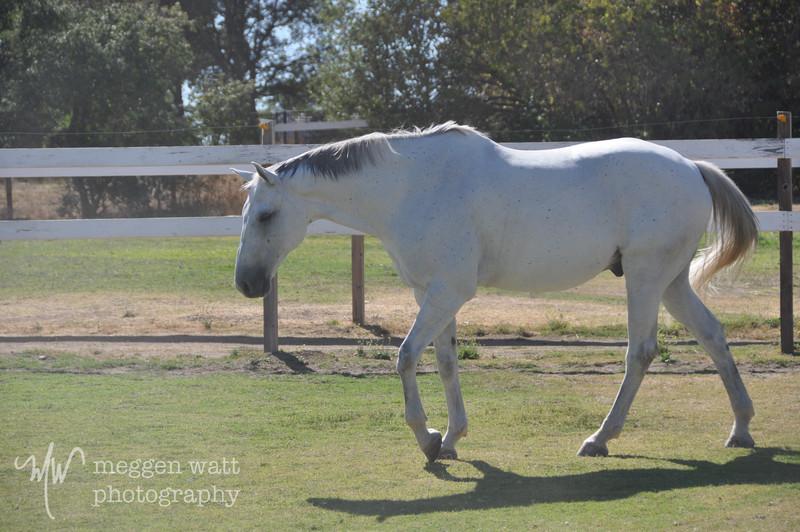 EB&Horses-142.jpg