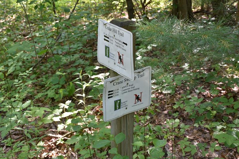 2019_06_26 CS Trail (13).JPG