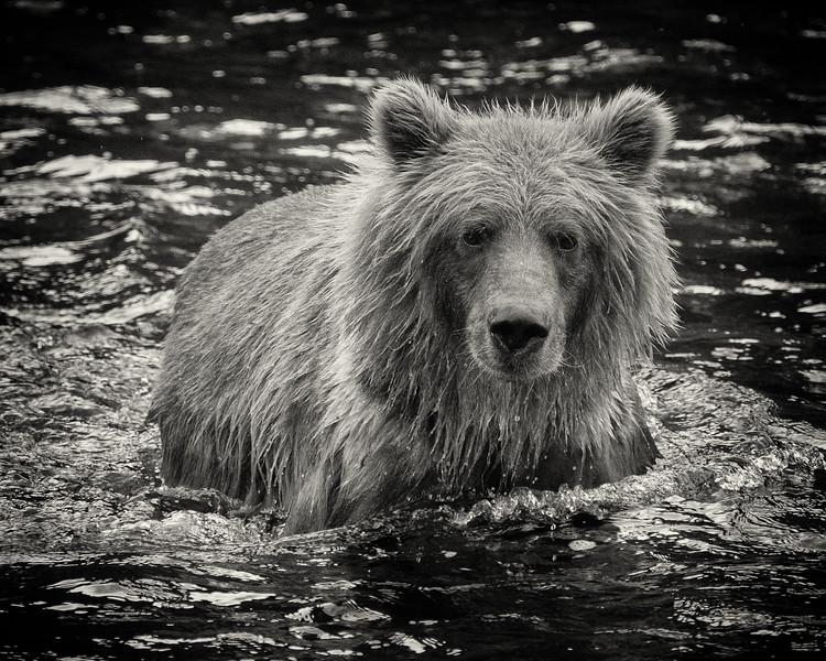 BC-Grizzly-Bears-0209-Edit.jpg