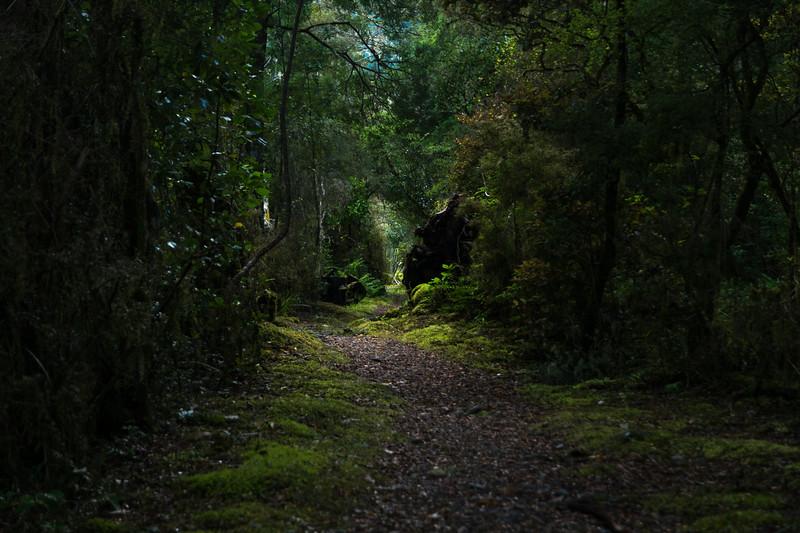 Rotoroa Path-1.jpg