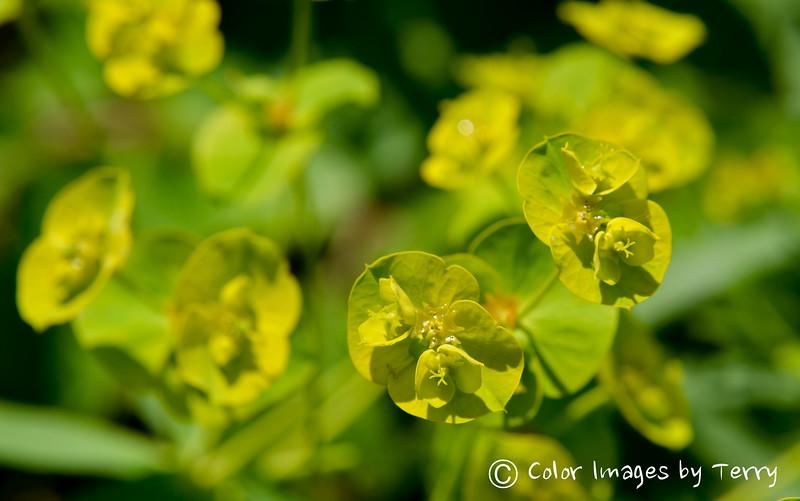 NJ Backyard Flowers-19-5.jpg
