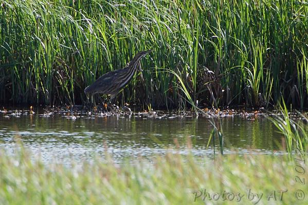 2012-04-09 Riverlands Migratory Bird Sanctuary
