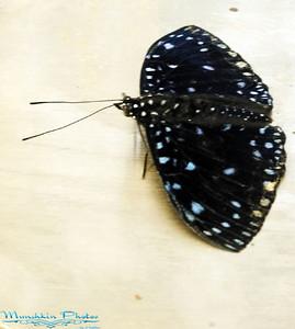 Butterfly Garden 2008