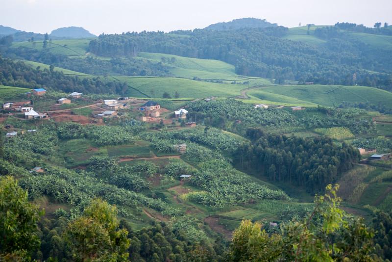 Nyugwe-Rwanda-77.jpg