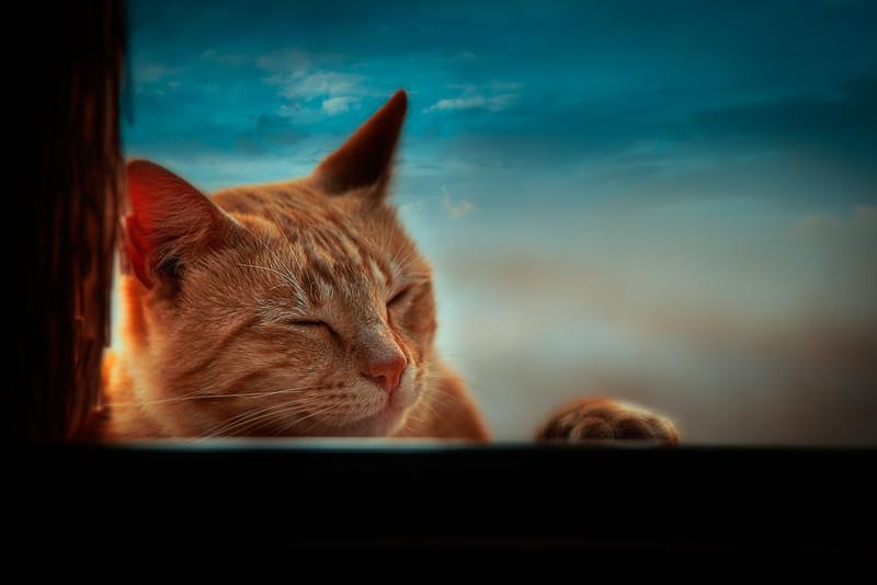 Garfield dreaming.jpg