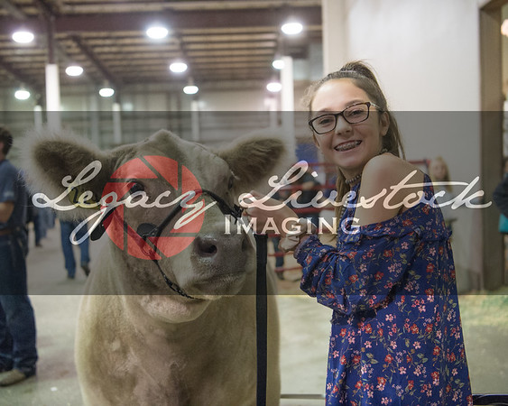 Junior Premium Livestock Auction