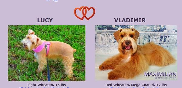 Lucy & Vladimir Puppy, DOB 5/7/2018