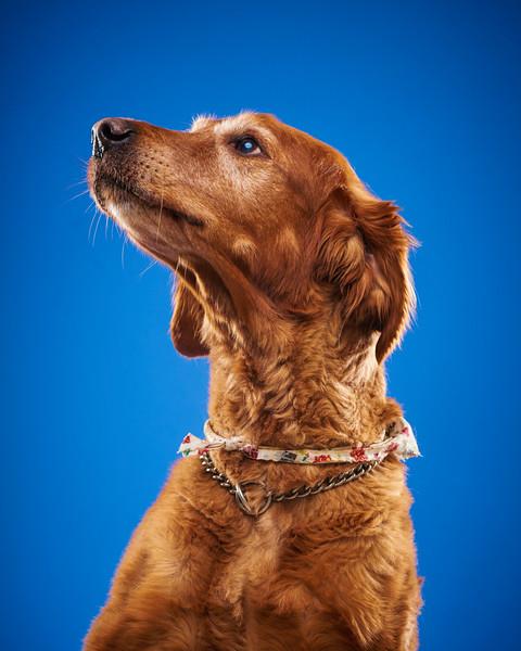 2016_12_24_Christmas Dogs4126.jpg