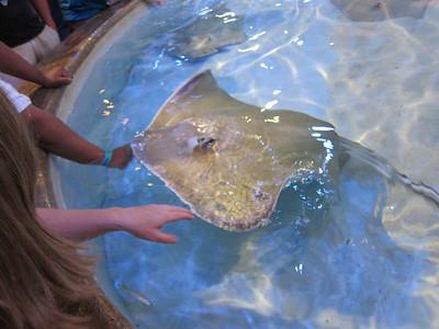 Denver Aquarium 2011May29