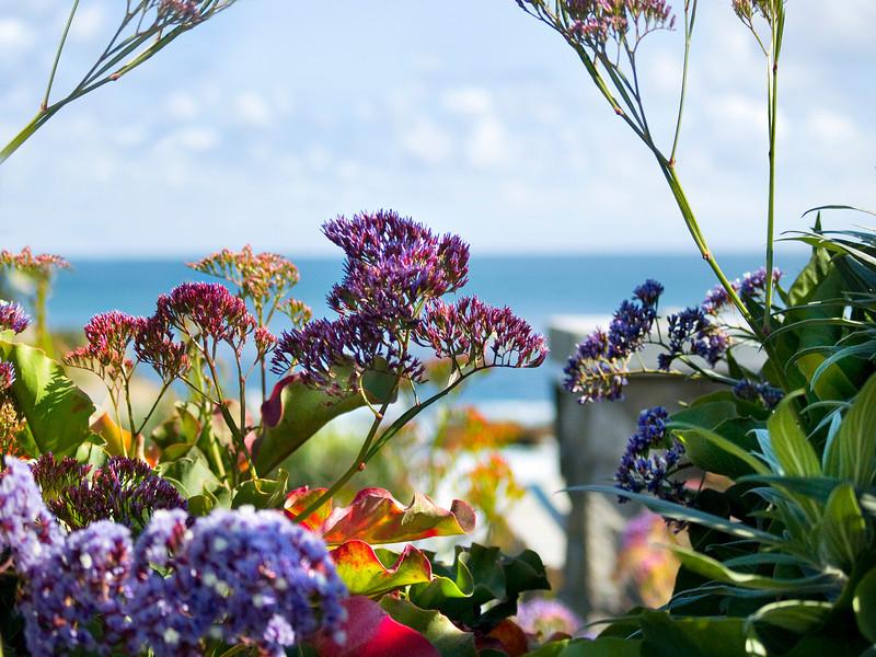 Laguna beach park flowers.jpg