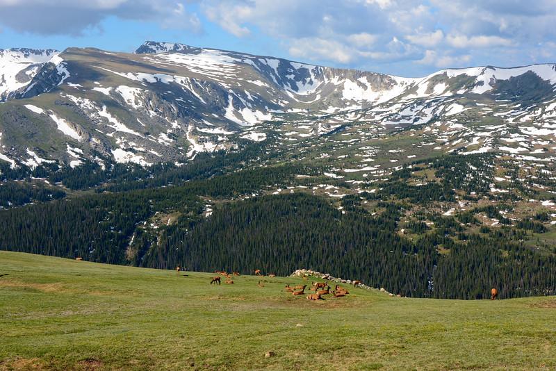Alpine Herd Of Elk