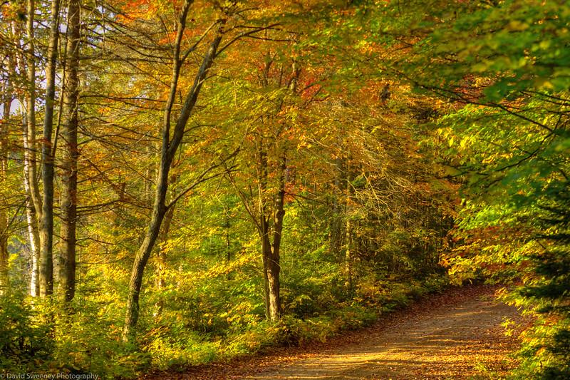 Morning Road Glow.jpg