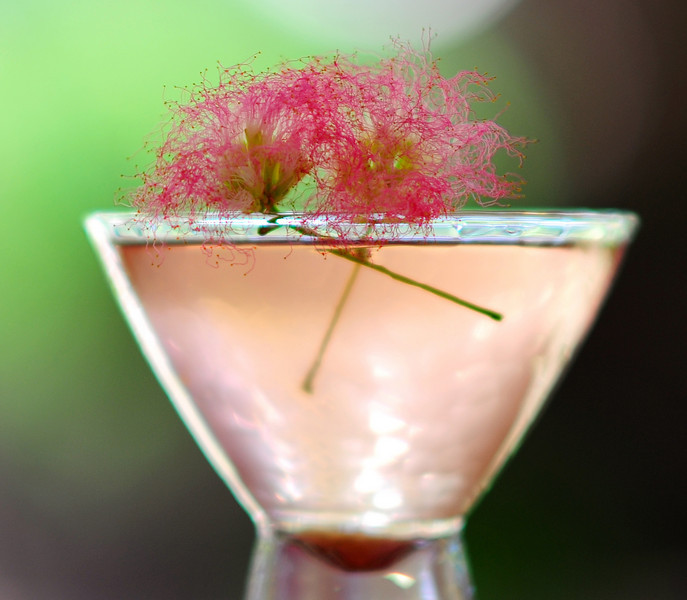 """Photograph of """"Pink Amanda Martini"""" made with iS Vodka especially for Amanda Lepore. A """"Pink Amanda Martini"""" is made with iS Vodka, Sprite, Fresh Limejuice, and a Dash of Organic Berry Juice for color. Garnish with a fresh sprig of Mimosa. IS Vodka http://www.isvodka.com is a super-pure, ulta-premium vodka distilled 7 times, mixed with glacier water from the land of ice and snow - Iceland."""