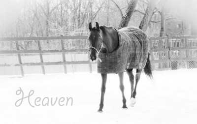 Palos Hills Riding Stables - New Traditions Riding Academy - Winter 2010-2011
