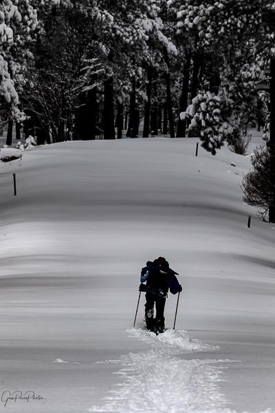 Winter on the Mogollon Rim
