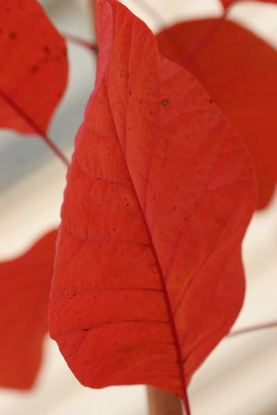 autumnal leaves 2013 013.JPG
