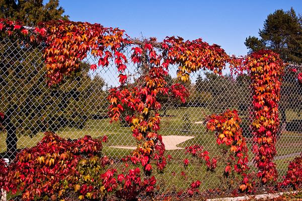 South Delta - Fall