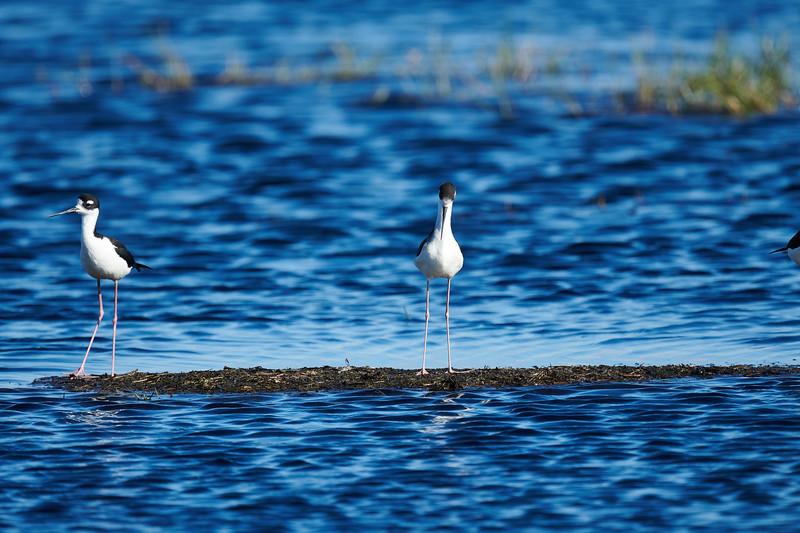 20181103 - Brazoria Wildlife Refuge-85B_4087.jpg
