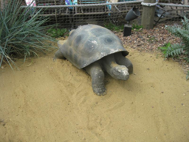 Tortoise statue in front of Castaway Island.
