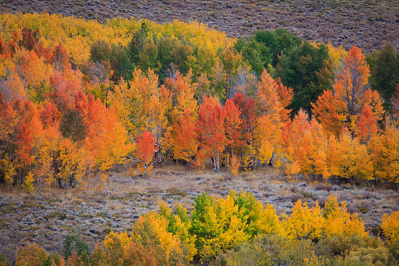 Eastern_Sierra_Fall_Color_Humboldt_Toiyabe_National_Forest_T6A5513.jpg