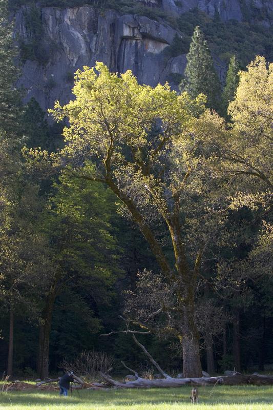 backlight-tree-valley.jpg