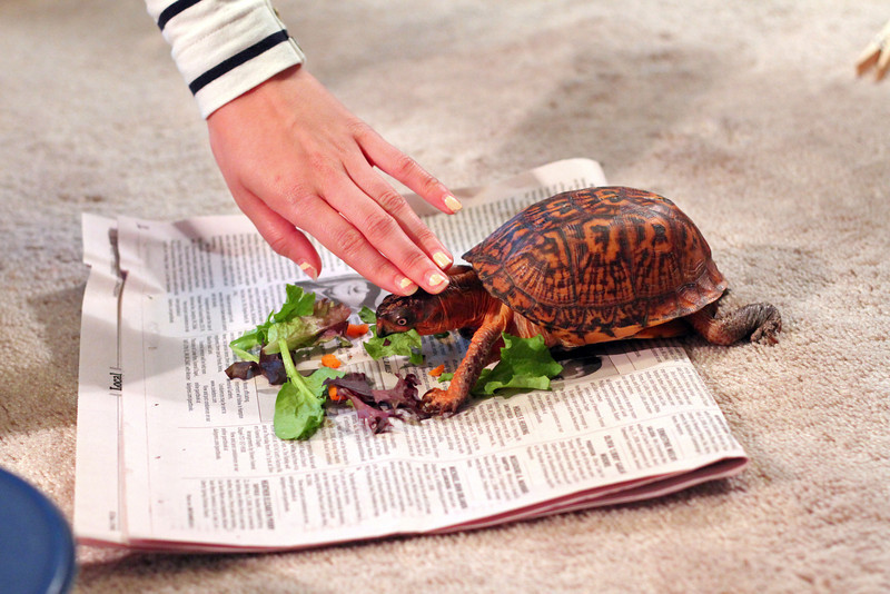 05/20/2012 - Turbo gets a pet-pet for eating his veggies