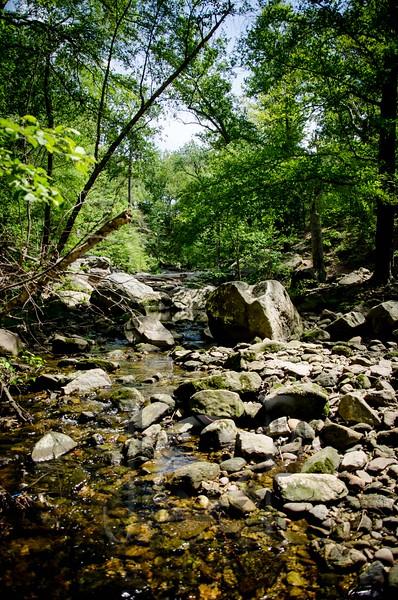 Forest_Hill_WM-1751.jpg