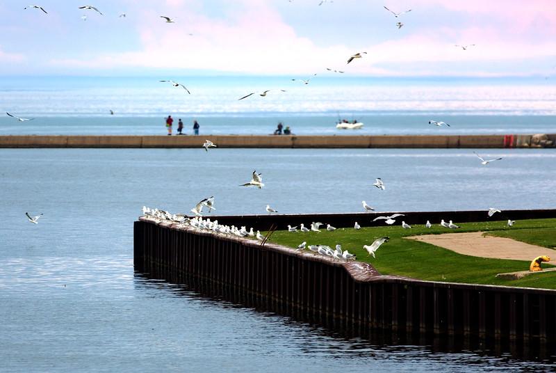 Gulls, gulls, gulls ...