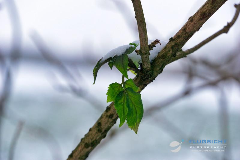 Natur_20190125_22.jpg